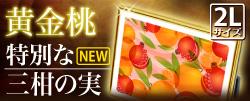 最上位 風水果実アートプレミアム2L三柑の実(黄金桃)特別版バナーサイド