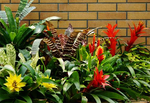 沢山の観葉植物イメージ