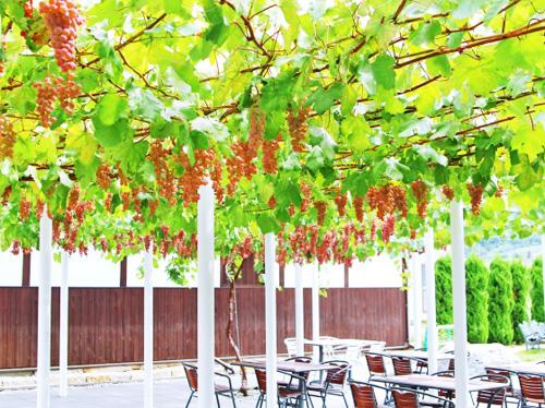 ブドウの木とテラス