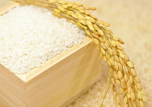 お米と稲穂イメージ