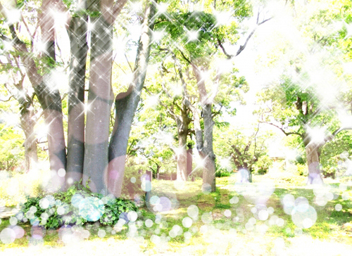 樹木オーライメージ