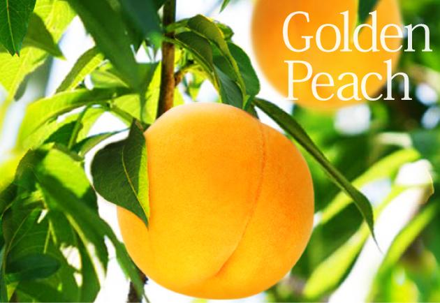黄金桃の木イメージ