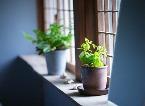 観葉植物の風景