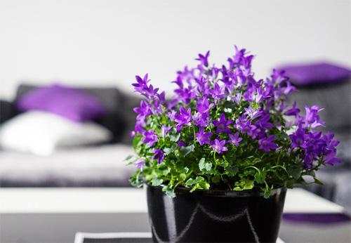 花の観葉植物