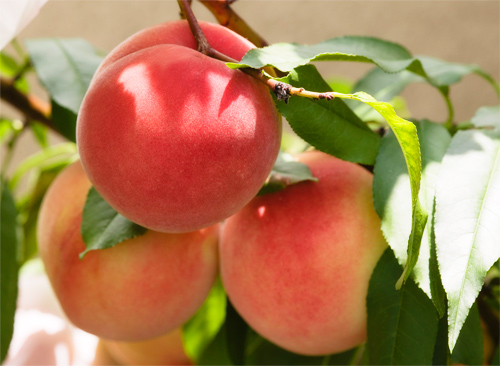 果物桃イメージ1