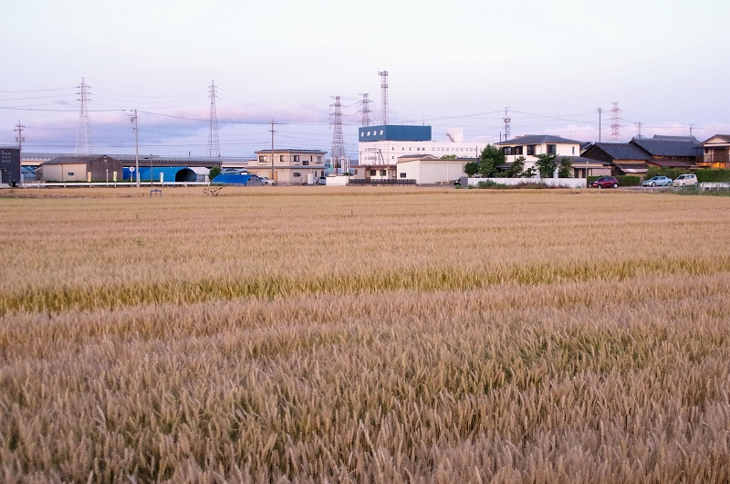 03-bakusyu12af.jpg