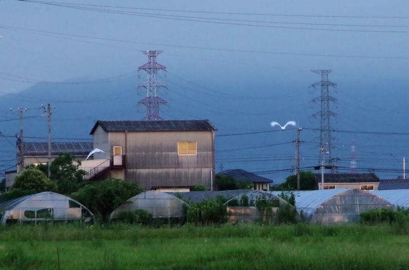 z-kosagi02af.jpg