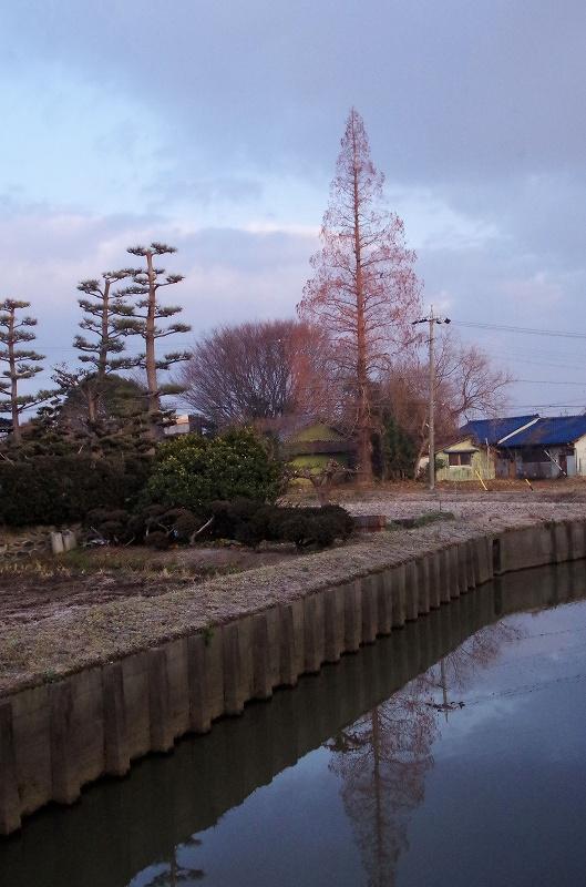 21-metase-koiya07af.jpg