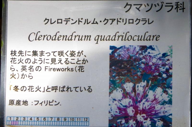 fuyu-hanabi96af.jpg
