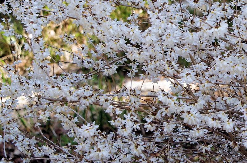 uchiwa-no-ki24xaf.jpg