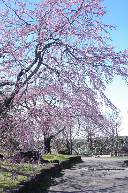 saku-inazawa322-53af.jpg