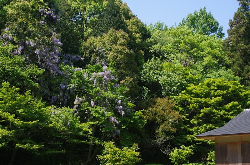 y-higasiyama02af.jpg