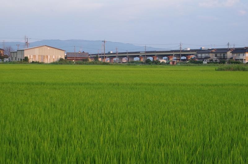 24-asa-tanbo01af.jpg