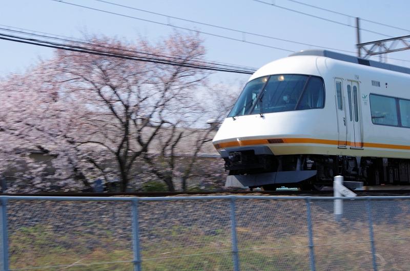 sakura-densya-36af.jpg