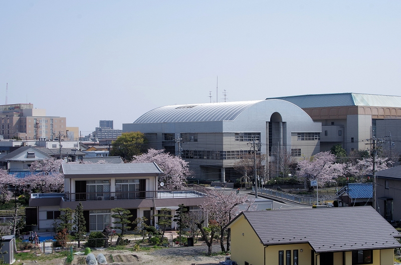 arena-121af.jpg