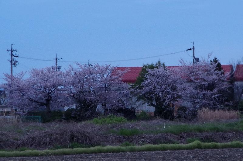 12-asa-sakura-01af.jpg