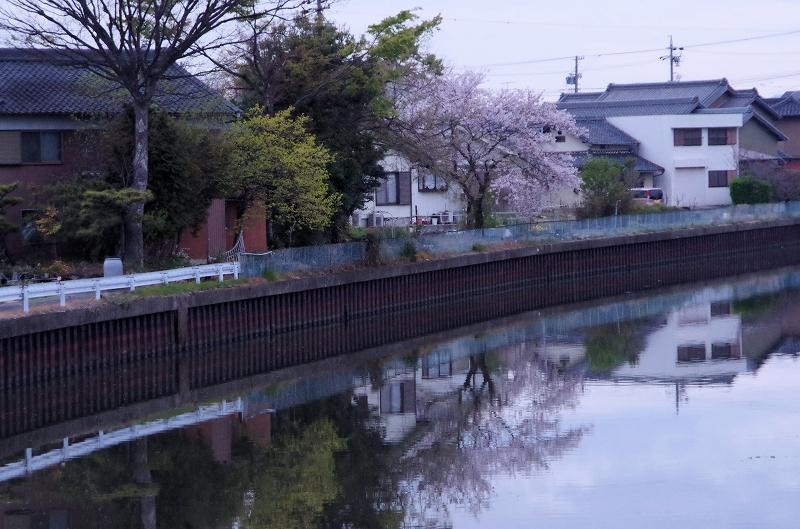 12-asa-sakura-05af.jpg
