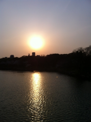 沈む夕日1(大阪城公園での花見)