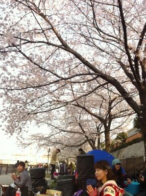 東の空と桜(大阪城公園での花見)