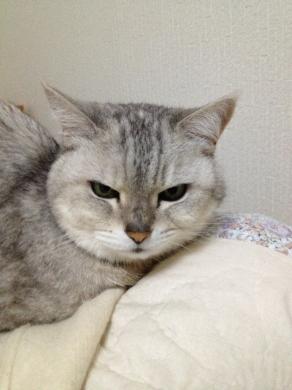 猫の悪巧み顔
