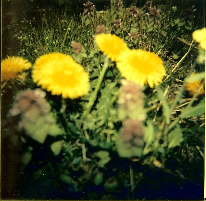 HOLGA3-flowers