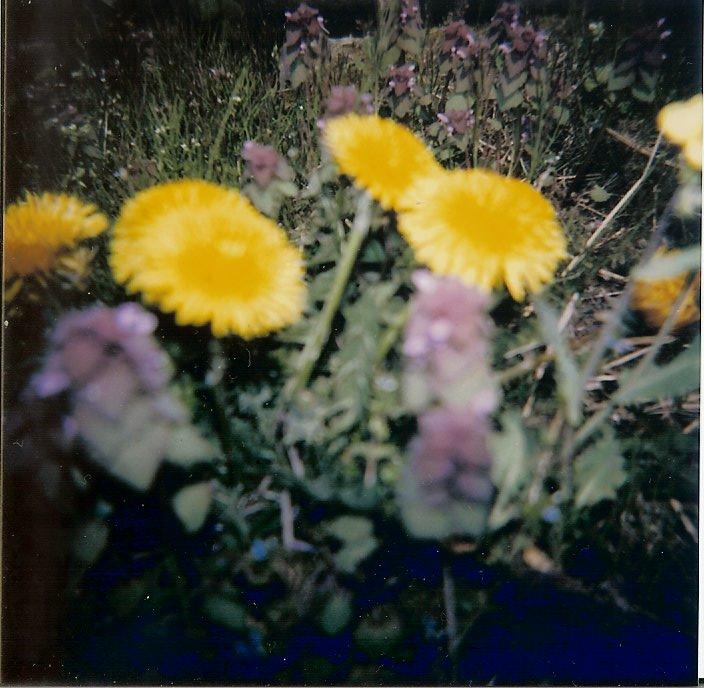 HOLGA3-flowers2