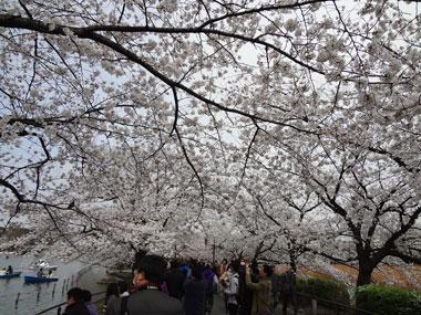 お花見2013−4.jpg