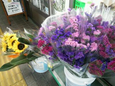 さぎ島の花