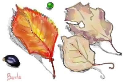 ベルルの落ち葉