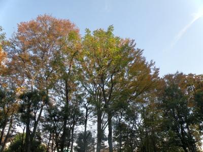 PB130047色づいた木々と青空_400.jpg