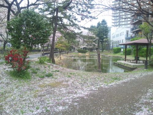 SBSH0275潮入の池と桜_500.jpg