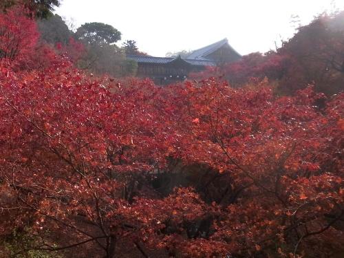 RIMG0175東福寺の紅葉みごと_500.jpg