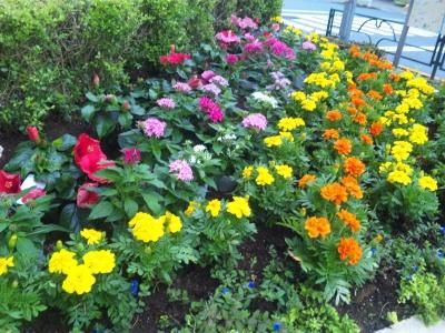 SBSH0490バス通のカラフル花壇_400.jpg