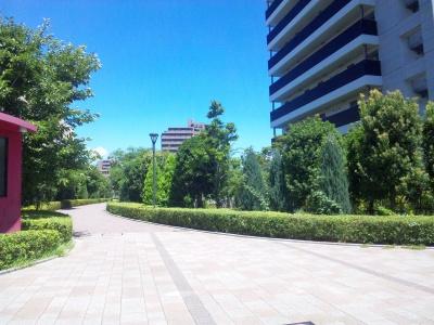 SBSH0560真夏の真昼のアリオの木々風景_400.jpg