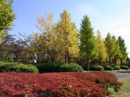 R0016350猿江公園紅葉_500.jpg