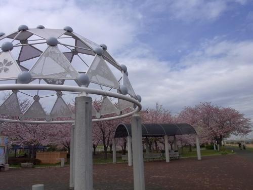 R0026299桜模様の屋根と満開の桜の風景_500.jpg