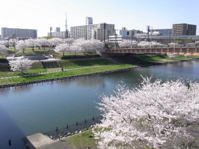 R0034940公園の旧中川の桜_400.jpg