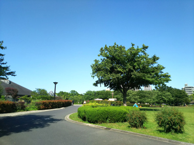 DSC_2559木場公園の風景_400.jpg