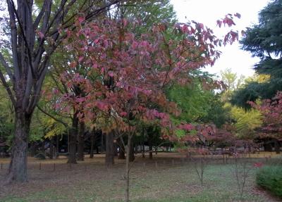 R0040515紅葉の風景_400.jpg