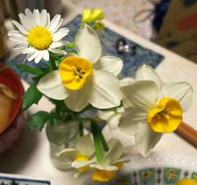 DSC_5733_0203夜-食卓の花ノースポール、スイセン_400.jpg