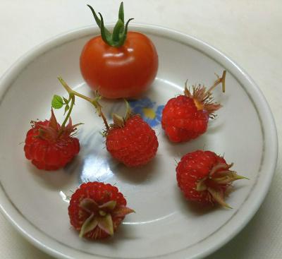 DSC_7269_0616朝-ラズベリー5個、ミニトマト1個収穫_400.jpg
