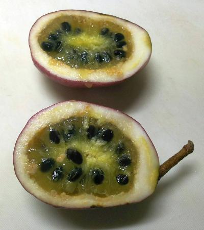 DSC_9726_1201-ムベの実の中央部を食べる甘い、外は石灰質_400.jpg