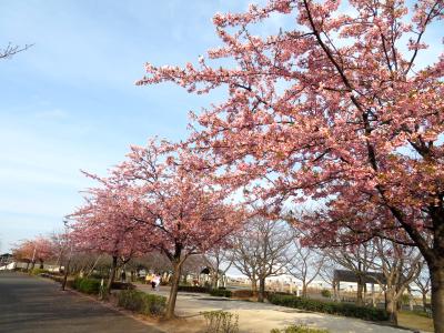 IMG_0689カワヅザクラの風景_400.jpg