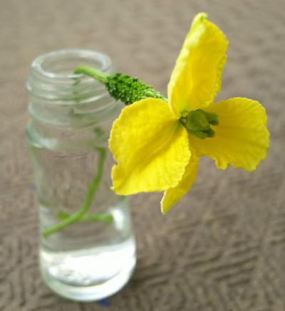 DSC_0546_0612ゴーヤの雌花、雄花がないので昨日蕾を摘んだら咲いた_400.jpg