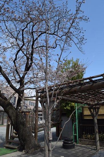 記念樹1.jpg