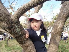 木登り ゆうか.JPG