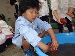 おイモ洗い1.JPG