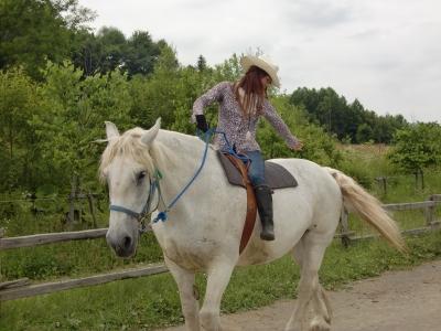 馬動物ヒーリング