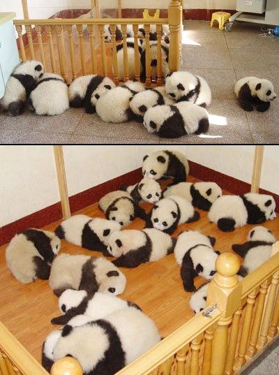 パンダのようちえん
