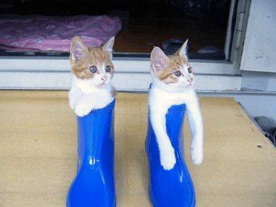 長靴をはいた猫